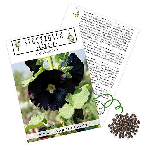 Stockrosen Samen zweijährig (Alcea Rosea) - Wunderschöne Rosen mit langer Blütezeit für besondere Akzente in Ihrem Blumenbeet (Schwarz)