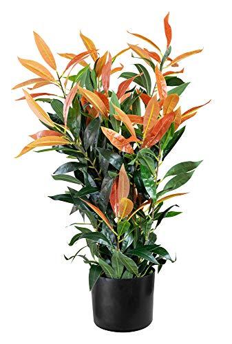 Decovego Künstliche Glanzmispel Photinia Kunstpflanze Künstliche Pflanze mit Topf 70cm