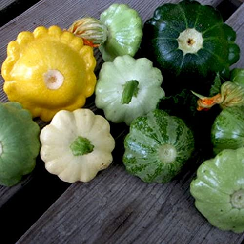 Aamish Patty Pan Squash Vegetable Seeds