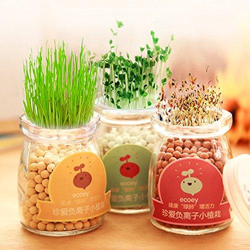 Graines Kale vert graines bonsaï végétales - 100pcs