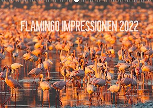 Flamingo Impressionen 2022 (Wandkalender 2022 DIN A2 quer)
