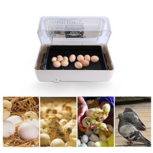 GOTOTOP 12/24 Eier Brutgerät Automatische Brutmaschine Flächenbrüter Inkubator Brüter (24 Eier)