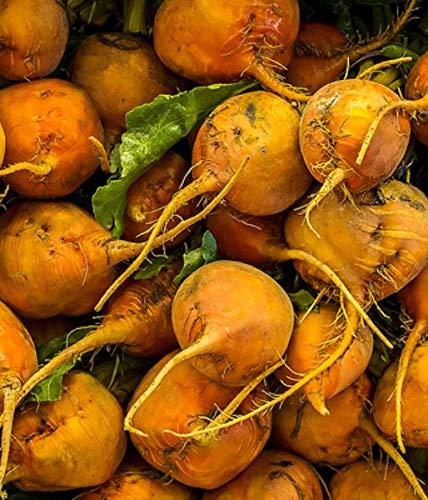 Russian Beet Northern Orange Fodder, Beet Seeds...