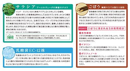 【WEB限定価格】サラシアごぼう茶 乳酸菌入り (1箱 60包入) サラシア+ごぼう+乳酸菌EC-12株(350億個配合)