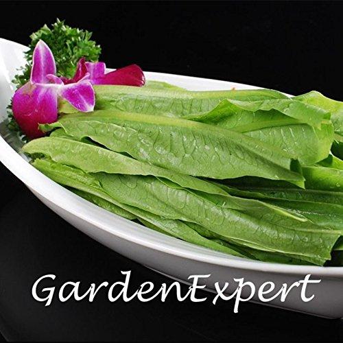 200pcs feuille verte graines de laitue verte Graines de légumes LACTUCA jardin Bonsai légumes bricolage plantes