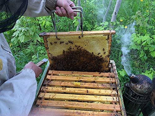 『【北欧産】Pasaka 生はちみつ 300g 天然非加熱 自然保護地区 百花種の蜂蜜 夏の季節』の6枚目の画像