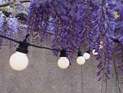 ELUME - Guirnalda luminosa para exterior con 20 bombillas blancas I LED de color blanco cálido I de 6 m de longitud, impermeable IP44, para decoración de terraza y jardín