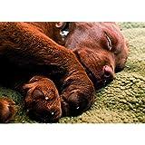 Farm-Land Hundedecke Pro Thermo in braun oder schwarz Hundebett