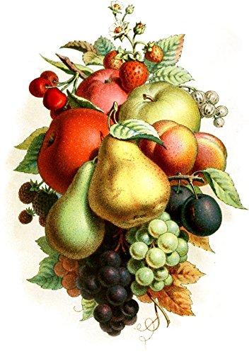 vintage fruit stickers - 2