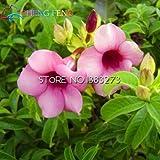 Großer Verkauf !!! 100pcs Schöne Allamanda Samen Seltene Blumensamen Topfpflanze DIY Hausgarten