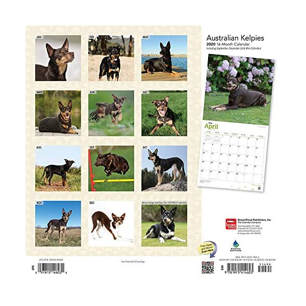 Australian Kelpies 2020 12 x 12 Inch Monthly Square Wall Calendar, Animal Dog Breeds (English, Spanish and French Edition) 2