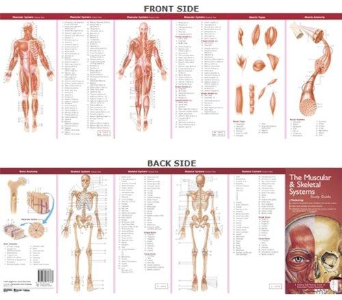 Anatomical Chart Company's Illustrated Pocket Anatomy: The M