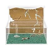 Anthouse - hormiguero natural de arena - kit l (sándwich + caja de forrajeo) (hormigas gratis)