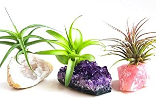 3 Pcs Tillandsia Air Plant Crystals Kit/Lot Includes Amethyst Cluster, Rose Quartz, and Crystal Geode/Terrarium Fairy Garden Stones + Kraft Gift Box