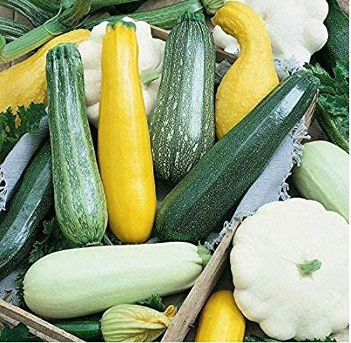 """Tomasa Gartensamen- Zucchinisamen Bio-Gemüse Kletterzucchin """"Mini-Courgette-Zucchinis"""",Gemüsesamen Garten Pflanzengemüse Hühnerei-Größe ernten"""