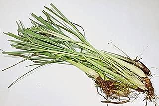 Fu Dog Garden Lemongrass (Cymbopogon Flexuosus) Fresh Premium (8) Stalks
