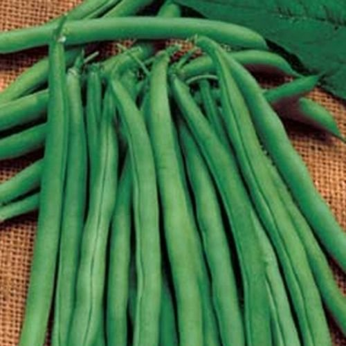 Green Bean 30 Seeds (Snap Bean) - Bush Blue Lake 274 (Stringless)