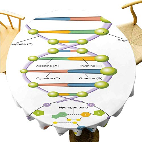 Educational Tablecloth - 54 Inch Multicolor Round Tablecloth Colorful Structure of DNA Genetic Code Amino Acids Nucleotides Scientific Study Suitable for Camping Multicolor