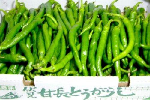 京都産  京野菜  伏見とうがらし 1kg