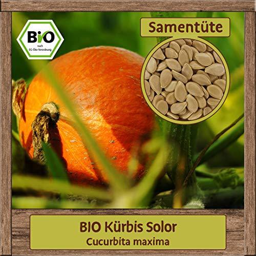 Samenliebe Hochwertige Kürbis Samen Speisekürbis Gartenkürbis samenfest ÖKO-DE-007 Mix Set BIO-zertifiziert, Sorte:BIO Kürbis Solor