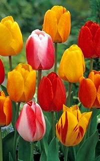 Best tequila sunrise tulip Reviews
