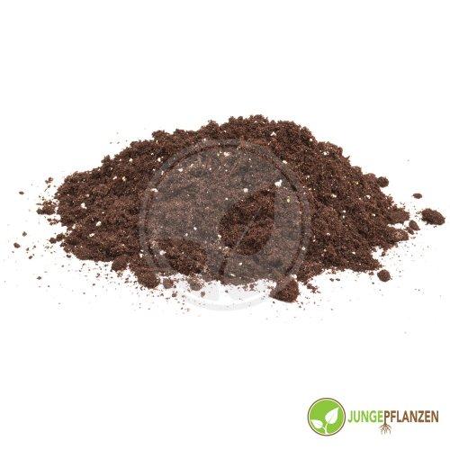 jungepflanzen Substrato - Terreno carnivoro, per Piante Carnivore 10 Litri