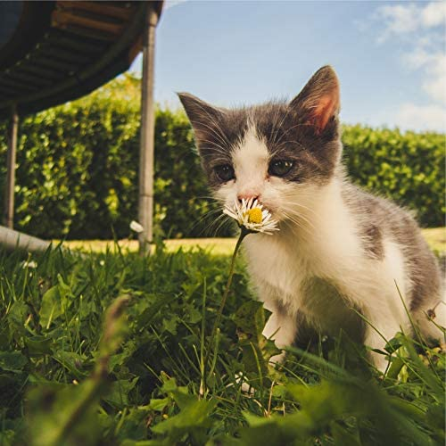 Music for Cats Project, Music for Relaxing Cats & Music for Cats Deluxe