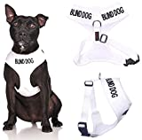 Dex-il Colour Coded Dog Warning Awareness Harnesses Leads Collars Coats - BLIND DOG (Large Vest 55-80cm)
