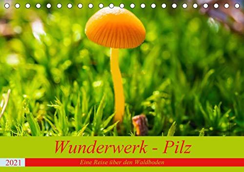 Wunderwerk - Pilz Eine Reise über den Waldboden (Tischkalender 2021 DIN A5 quer)