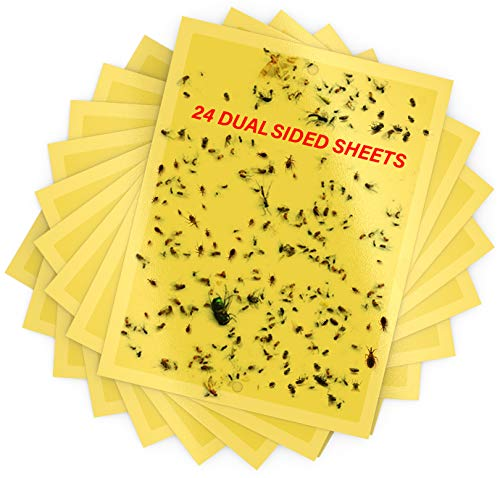Dual-Sided Yellow Sticky Traps 6 x 8 inch- Sticky Traps for Fungus Gnat, Flies, Aphids, Leaf Miners, Whiteflies, Thrips and Other Flying Insects 24 Pieces