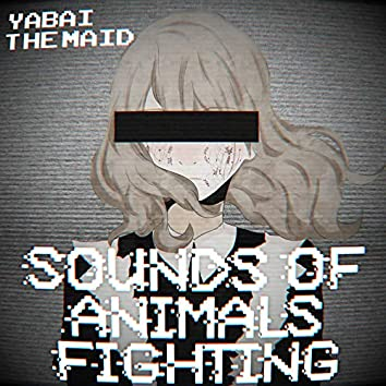 Sounds of Animals Fighting