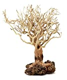 Bonsai Driftwood Aquarium Tree (7 Inch Height) Natural, Handcrafted Fish Tank Decoration   Helps Balance Water pH Levels, Stabilizes Environments   Easy to Install   BBS