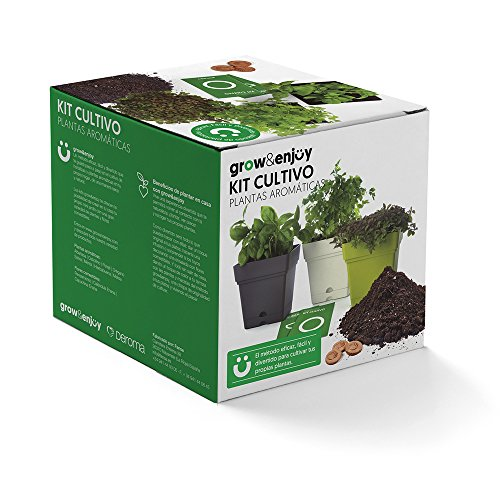 Grow & Enjoy Samba - Kit de cultivo Hierbabuena, maceta cuadro, 18 cm, color verde claro