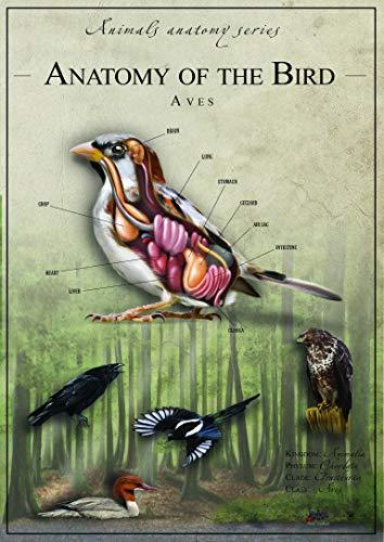 De Vogel Anatomie Versie 1 - Educatieve grafiek - Beste Print Kunst Reproductie Kwaliteit Wanddecoratie Gift Canvas A1