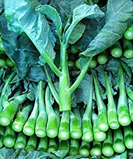 1000 Seeds: Chinese Kale kailaan Chinese Broccoli GAI LAN pak Choy Seeds