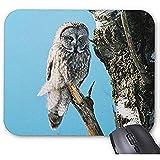 Alfombrilla de ratón diseñada de Moda Great Grey Owl 30 * 25 * 0.3 cm Pad de Escritorio de Oficina y Familia Hogar y Oficina Buen Regalo