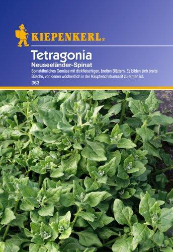 Spinat Tetragonia - Neuseeländer Spinat