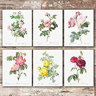 Vintage Flowers Wall Art Prints (Set of 6) - Unframed - 8x10s | Roses