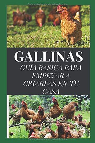 GALLINAS: GUÍA BÁSICA PARA EMPEZAR A CRIARLAS EN TU CASA