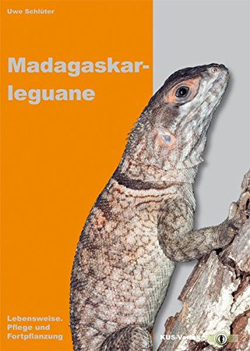Madagaskarleguane: Lebensweise, Pflege und Fortpflanzung