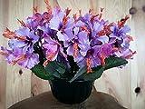 roselynexpress Composition de Fleurs artificielles lesté Ciment pour Une Parfaite Tenue à l' Exterieur. Réalisé par nos Soins, Les Fleurs sont Aussi de très Bonne Tenue et qualité.