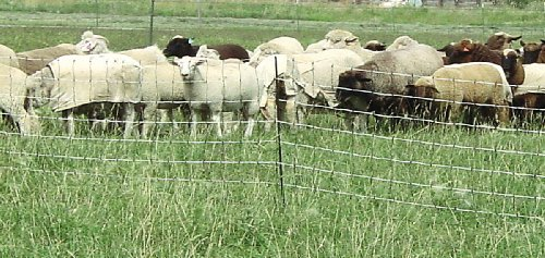 Powerfields P-75-W Electric 32-Inch Sheep Fence-Netting,...