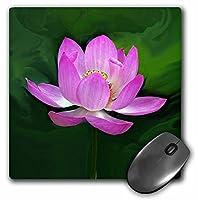 3drose LLC 8x 8x 0.25インチマウスパッド、Lotus ( MP _ 1125_ 1)