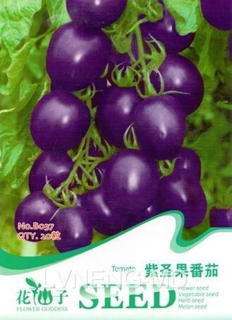 Tomate cerise Graine pourpre Tomate 20pcs végétales / Sac Fruit Lycopersicon Esculentum Seed