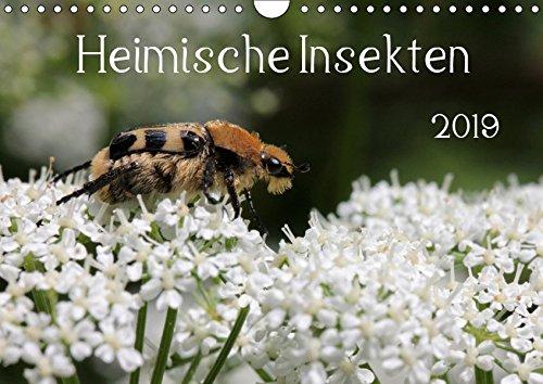 Heimische Insekten 2019 (Wandkalender 2019 DIN A4 quer): Nahaufnahmen von deutschen Gartenbewohnern (Monatskalender, 14 Seiten ) (CALVENDO Tiere)
