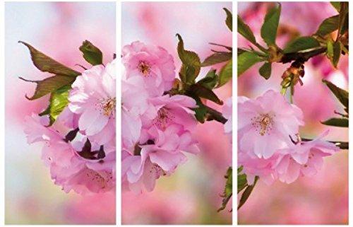 1art1 Blumen - Kirschblüten, 3-Teilig Bilder Leinwand-Bild Auf Keilrahmen   XXL-Wandbild Poster Kunstdruck Als Leinwandbild 180 x 120 cm