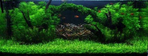 Moosbrücke Unterwasser-Landschaft Moosbrücke für 100 Liter Aquarium