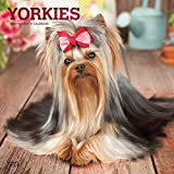 Yorkshire Terriers 2021 Calendar: Foil Stamped Cover