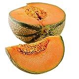 Charentais Melon - Cantaloupe Type