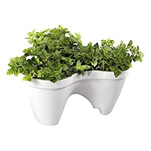 Keter – Macetero triple aplilable Ivy, Color Blanco